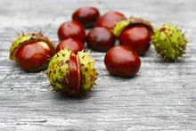 Kastanien Im Herbst Als Arzeneimittel, Heilmittel, Arzenei - Alternativmedizin, Waschmittel Aus Der Natur Durch Enthaltene Saponine, Seifenhaltige Substanzen
