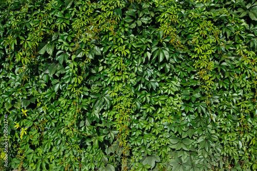 tlo-zielona-sciana-pokryta-bochenkiem