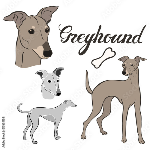 Greyhound dog breed vector illustration set isolated Canvas Print