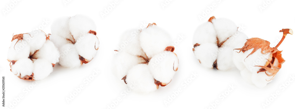 Fototapety, obrazy: Set of cotton plant flowers isolated on white background. Collection.