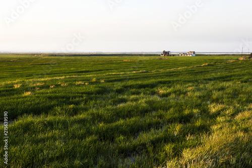 Photo  çeltik tarlası tarım alanı