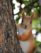 Squirrel in Gorky Park, Moscow
