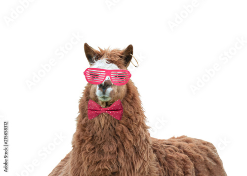 Foto op Plexiglas Lama Cool lama with pink glasses and pink bow in polka dots isolated on white background
