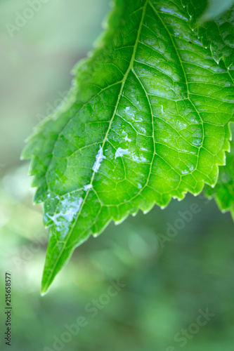 zielony-lisc-w-ujaciu-makro