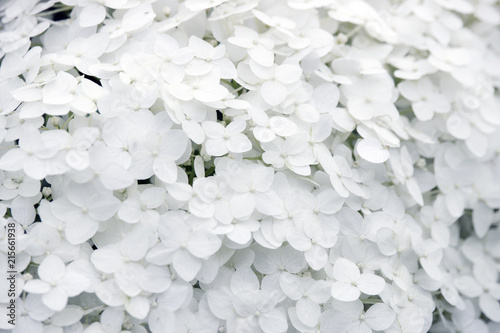 background of white flowers, petals