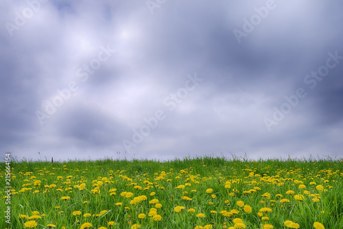 In de dag Weide, Moeras Meadow with Dandelions (Taraxacum officinale) and Dramatic Sky, Bavaria, Germany