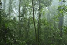 Rainforest, Dorrigo, Dorrigo N...