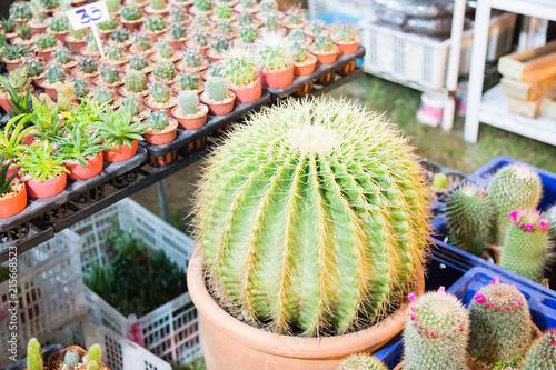 Foto op Plexiglas Cactus little cactus in market