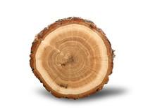 Log Cross Section