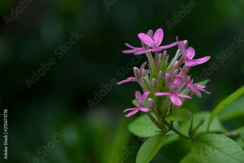 Papiers peints Azalea Pink azalea flower and green background. Copy space