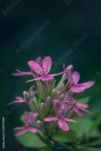 Pink azalea flower and green background. Copy space