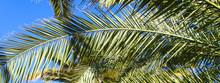 Palm Tree Banner - Leaves Agai...