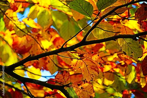 Fotografie, Obraz  Herbstlaub