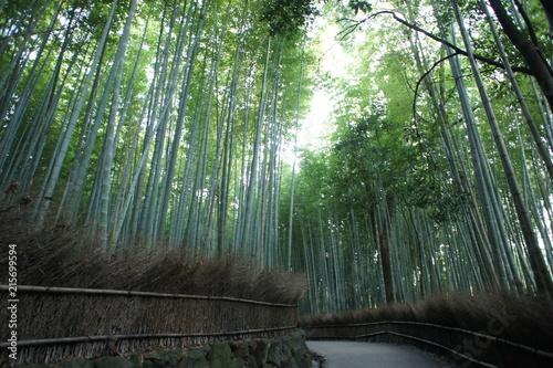 Foto op Plexiglas Bamboe Arashiyama Bamboo Forest