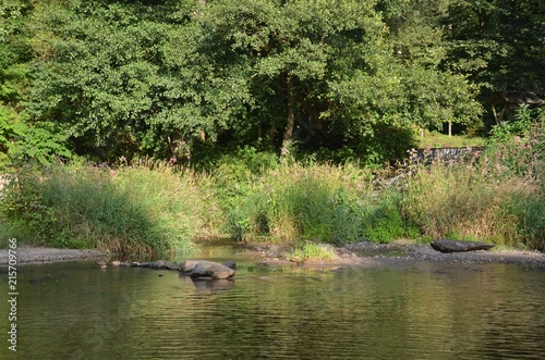 Foto op Plexiglas Rivier Naturlandschaft Fluss am Wald im Sommer