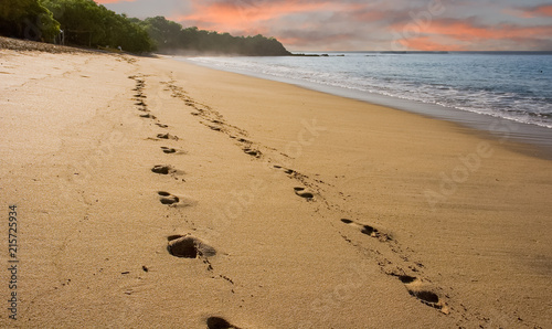 Footsteps on Early Morning Beach Wallpaper Mural