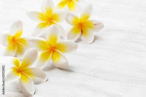 In de dag Frangipani Frangipani flower on white background