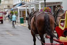 Town Horse