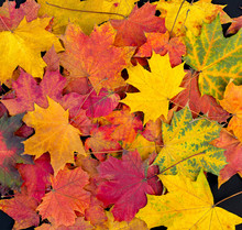 Colorful Autumn Leaves Backgro...