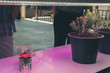 canvas print picture - plant growing in smart indoor farm with artificial led light. phyto lamp for seedling & cultivation