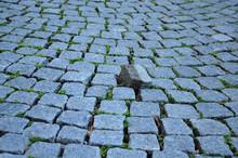 Stumble Stone In Pavement