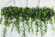 White Wall Decorated With Hanging Green Ivy