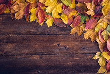 Autumn Background, Space For Text