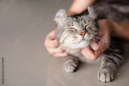 Fotomural  happy cat lovely comfortable sleeping by the woman stroking hand grip at