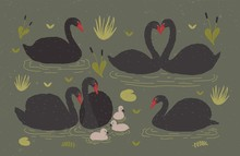 Flock Of Black Swans And Brood Of Cygnets Floating Together In Pond Or Lake Among Water Plants. Gorgeous Wild Birds, Waterfowl. Flat Colorful Hand Drawn Vector Illustration In Cartoon Style.