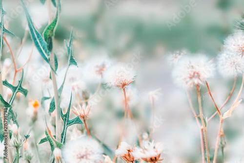 Szare   biale-pole-kwiatow
