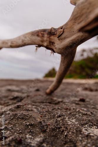 Staande foto Oceanië Driftwood on an overcast day