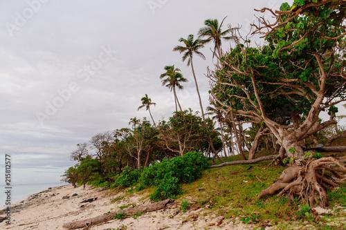 Staande foto Oceanië Coconut palms in dawn light