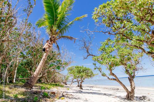 Foto op Aluminium Oceanië Fit man climbing for coconuts in Fiji