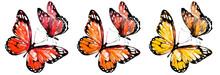 Beautiful Red Butterflies, Set...