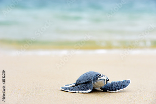 Fotografie, Obraz Little turtle on the beach,Copy space.