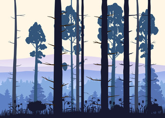 Fototapeta Las Sunny forest background. Vector illustration of woods in forest in sunlight background. Isolated