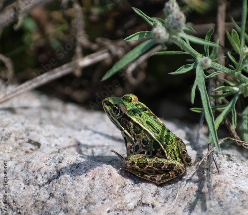 Tuinposter Kikker Isolated Frog Sitting in the Sun