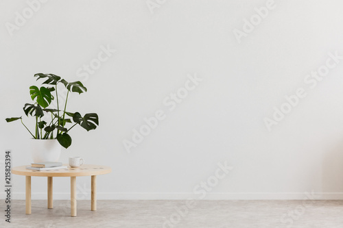 Photo Plant on wooden table against white empty wall with copy space in living room interior