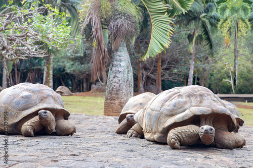 Carta da parati The crocodile park in Mauritius, Africa