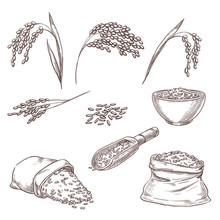 Rice Cereal Spikelets, Grain I...