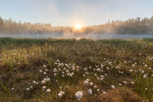 Small Foggy Forest Lake At Sunrise Summer Morning