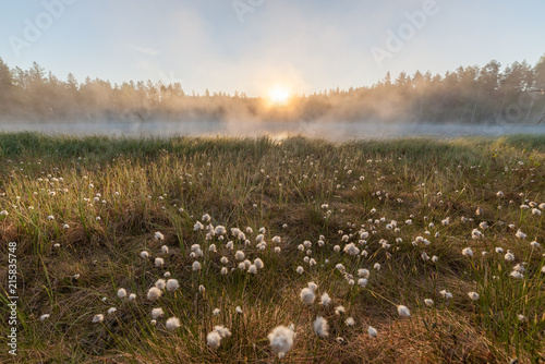Αφίσα Small foggy forest lake at sunrise summer morning