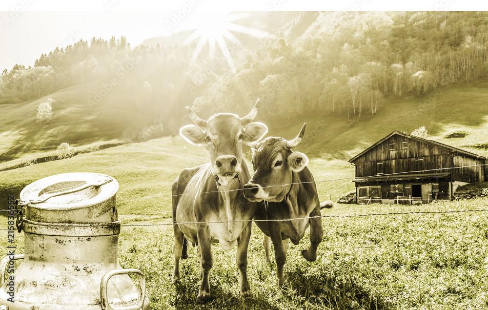 Fototapeta Kühe auf der Alm