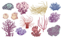 Hand Drawn Collection Of Corals