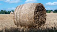 Straw Bale After Harvest On A ...