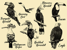Set Of Hand Drawn Sketch Style Exotic Birds. Isolated Vector Illustration.