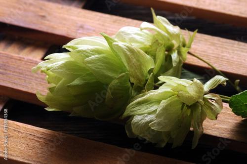 Staande foto Bier / Cider Humulus lupulus