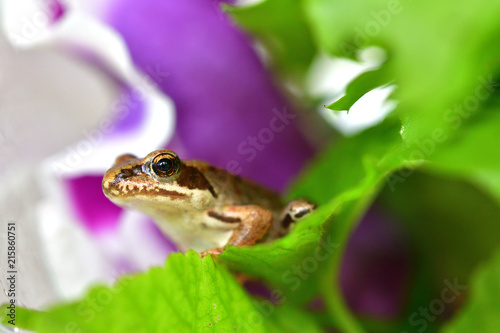 Tuinposter Kikker macro photography frog in colorful flowers