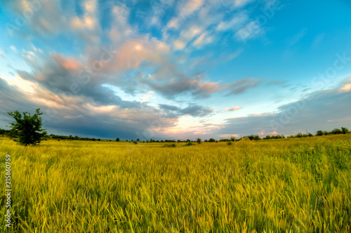 Canvas Prints Honey spring in the steppe
