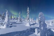 Northern Lights (Aurora Borealis) Above The Snowy Woods, Pallas-Yllastunturi National Park, Muonio, Lapland, Finland